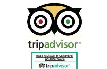 Trip Adivsor